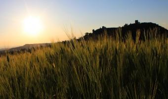 Monticchiello grano